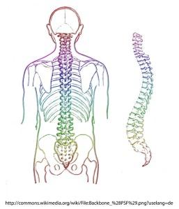 spine-257870_960_720